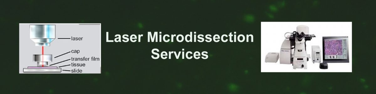 Laser Microdissection Service
