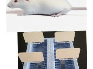 Mouse Paraffin Tissue Sections