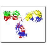Labeled Secondary Antibodies, Streptavidin and Nucleotides