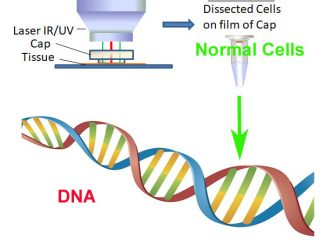 Genomic DNA from Pure Normal Cell Population