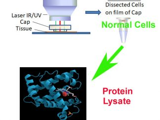 Protein from Pure Normal Cell Population